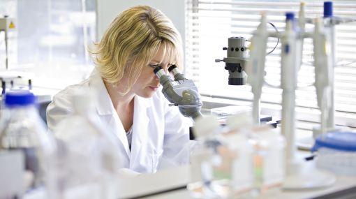 Células madre sobreviven hasta 17 días en cadáveres