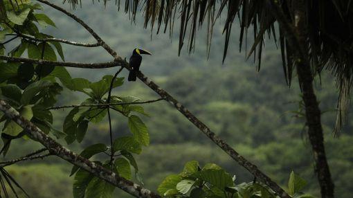 El ecoturismo es la clave para el futuro de Costa Rica