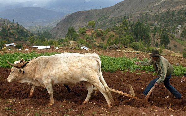 Gobierno aprobó proyecto para crear el Ministerio de Agricultura y Riego