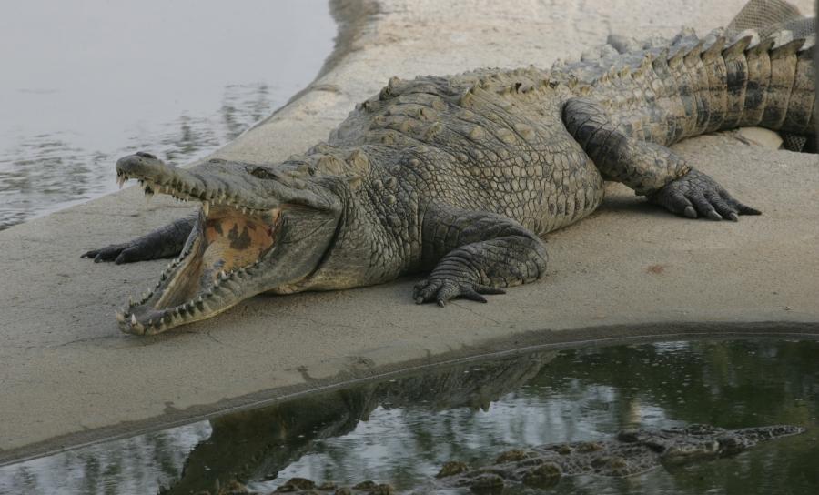 FOTOS: los animales más peligrosos del mundo