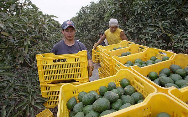 Agap: Agroexportaciones sumarán US$5.000 millones en el 2014