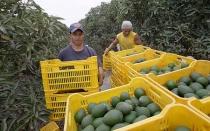 Adex pide extender ley de promoción agraria por 20 años más - Noticias de eduardo amorrortu