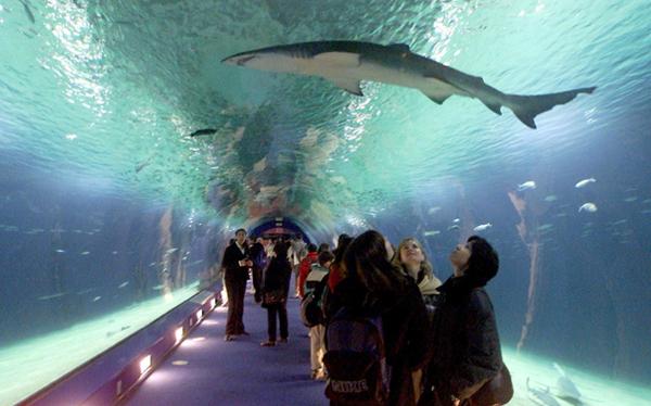 Conoce cuáles son los túneles más extraños del mundo