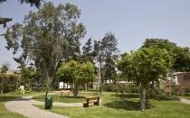 Municipios distritales de Lima deberán hacer inventario de árboles - Noticias de ana zuchetti