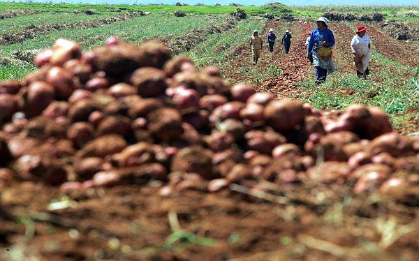 Instituto Crecer: PBI agrícola se reduciría en 2% por El Niño