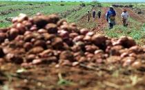 Instituto Crecer: PBI agrícola se reduciría en 2% por El Niño - Noticias de fenómeno de el niño