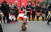 Esta es la Unidad Canina que promete acaparar las miradas en la Parada Militar - Noticias de desfile militar