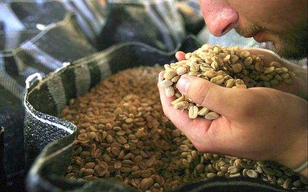 ¿Por qué caerán la producción y exportación de café peruano este año?