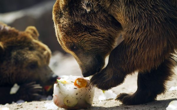 FOTOS: así combaten la ola de calor los animales del zoológico de Madrid