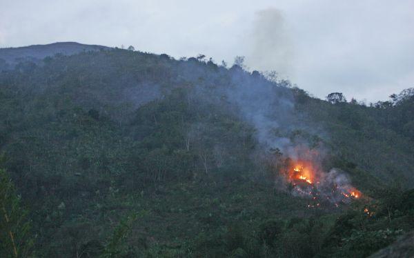 Incendios forestales se registran en Junín y Áncash