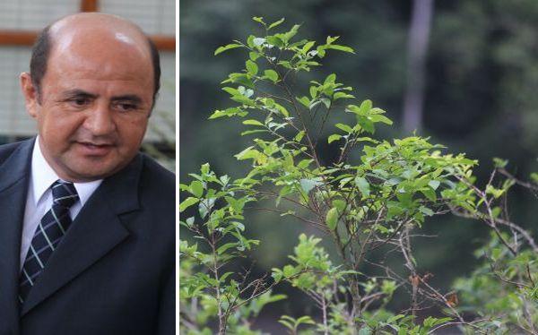 Loreto alerta sobre mayor cantidad de sembríos de coca que en el VRAE