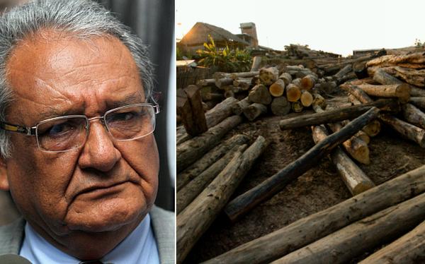 Sendero Luminoso también sería financiado por tala ilegal y minería clandestina
