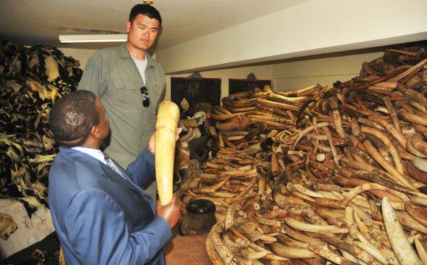 Estrella del baloncesto chino viajó a Kenia para realizar un documental contra la caza furtiva de elefantes