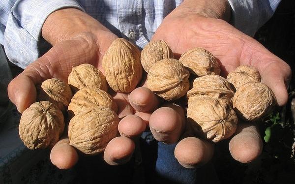 Dos puñados de nueces al día mejoran la fertilidad masculina