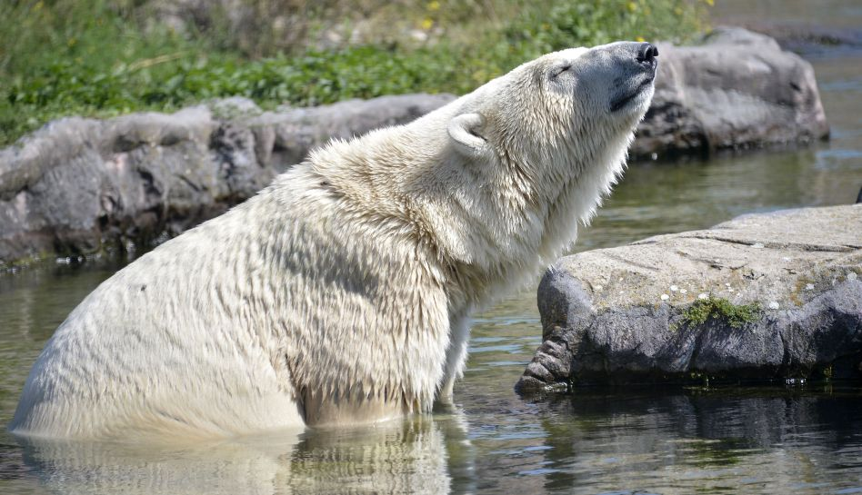 FOTOS: los animales que marcaron la semana