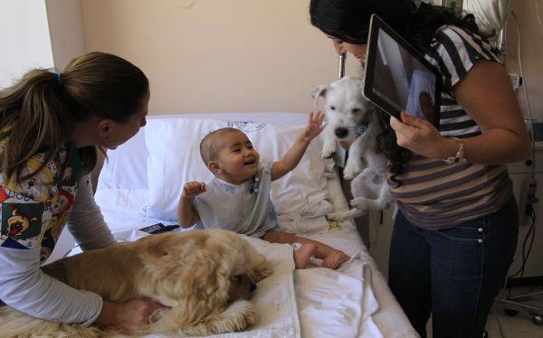 FOTOS: terapia con perros ayuda emocionalmente a niños con cáncer en Ecuador