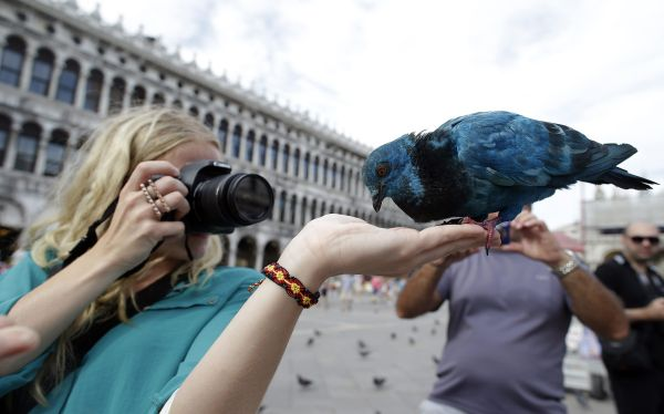 Palomas azules, verdes y rojas invaden Venecia por la Bienal de Arquitectura