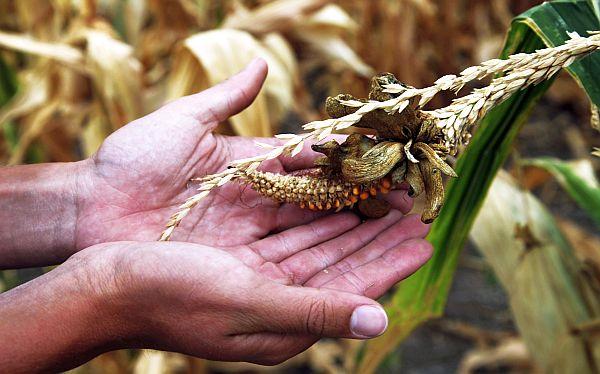 Precio mundial de alimentos subió 10% en julio por sequía en EE.UU. y Europa
