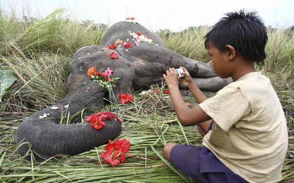 India: una elefanta falleció al ser golpeada por un tren de pasajeros