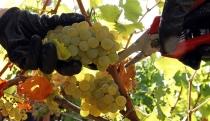Exportación de uvas reducirá su costo al ingresar por el puerto de Miami - Noticias de fernando albareda