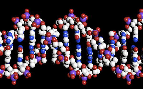 """Científicos revelan la """"guía del genoma humano"""" y cómo funciona el ADN"""