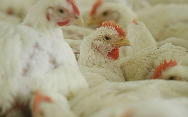 Minag: Producción agropecuaria creció 3,9% entre enero y julio