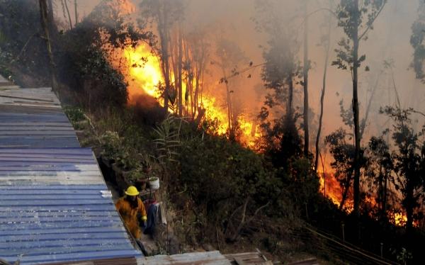 """Ningún país de la UE es """"inmune"""" a incendios forestales, advierte Comisión Europea"""