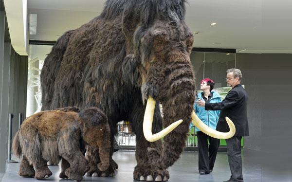 Laboratorio surcoreano clonaría mamut hallado en Rusia