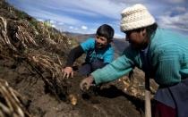 Canon minero de las regiones caería casi a la mitad en el 2014 - Noticias de epifanio baca