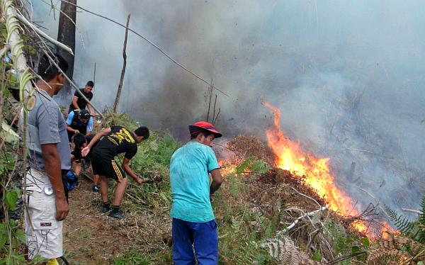 Incendio forestal arrasó más de 20 hectáreas de bosques y cultivos en el Vraem