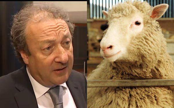 """Murió Keith Campbell, uno de los """"padres"""" de la oveja Dolly"""