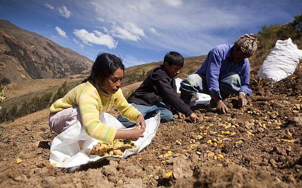 Conoce cuáles son las regiones del país con mayor inseguridad alimentaria