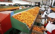 Minagri: Producción agropecuaria creció 1,9% entre enero y octubre - Noticias de producción pecuaria