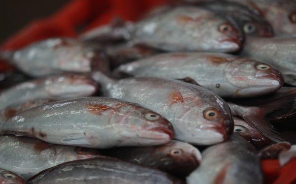 Pescado de carne oscura o blanca: ¿cuál es mejor para la salud?