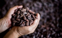 Consumo de café en el Perú es solo de 500 gramos por persona - Noticias de oic