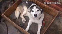 VIDEO: ¿Estás buscando mascota? Conoce dónde puedes adoptar una - Noticias de karim benzem��