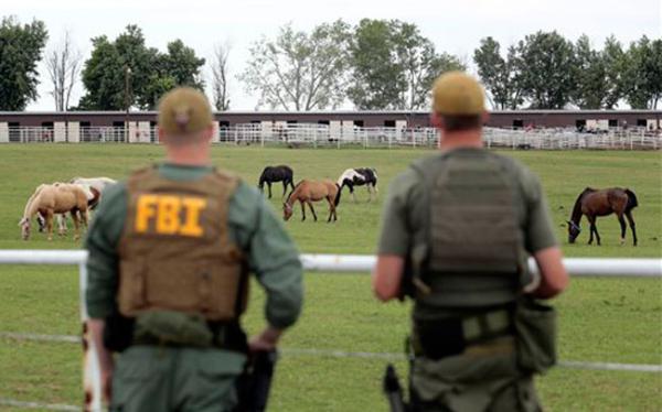 EE.UU. subasta 340 caballos del cártel mexicano de Los Zetas