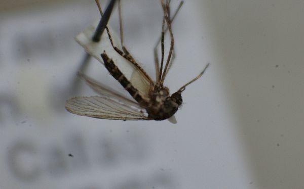 La Libertad: sector salud confirmó 127 casos de dengue