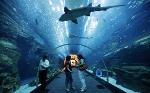 ¿Pasarías una noche rodeado de tiburones?