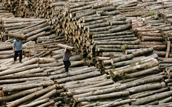 China es acusada de ser el mayor responsable de deforestación del planeta