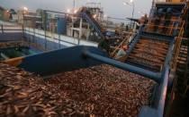 ¿Quién gana y quién pierde con la polémica norma que regula la pesca de anchoveta? - Noticias de patricia majluf