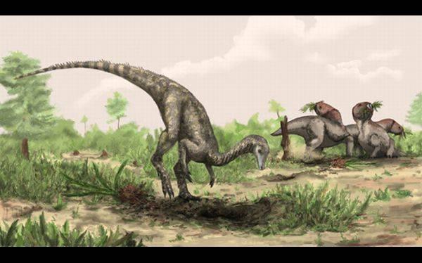 Descubrieron en un museo los restos fósiles del dinosaurio más antiguo