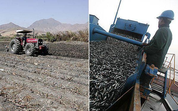 Agricultura y pesca tienen la mayor expectativa de empleo