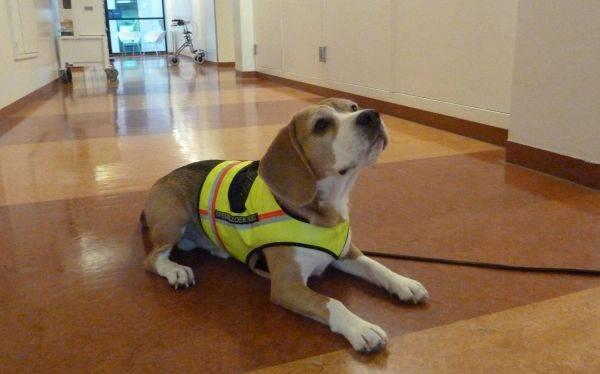 Cliff, el perro que 'diagnostica' más rápido que cualquier médico