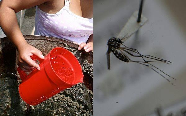 ¿Quieres viajar a Pucallpa? Aquí unos consejos para evitar el dengue