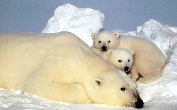 Científicos proponen 'recongelar' el Ártico para evitar calentamiento global