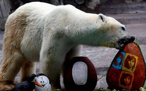 Calor y cohetes navideños mataron al último oso polar del zoológico de Buenos Aires