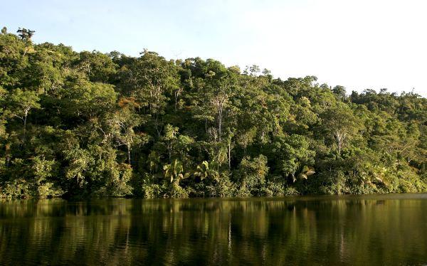 El calentamiento global disminuye la eficiencia de los bosques para absorber el CO2