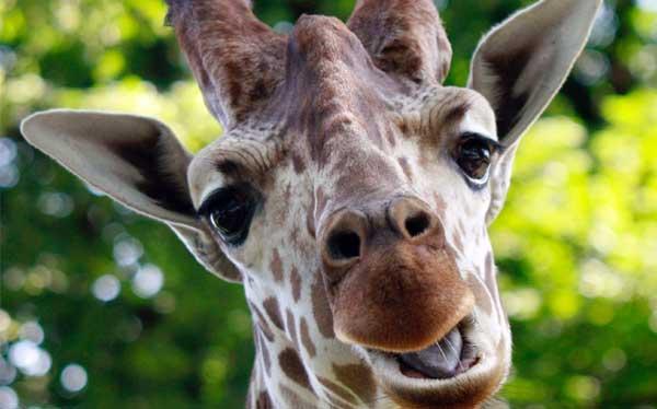 ¿Cómo meter una jirafa en una congeladora? Las preguntas más raras en entrevistas de trabajo
