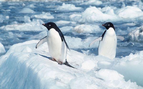 La acidificación del mar amenaza los ecosistemas marinos en la Antártida